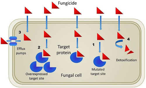 mode of action of fungicides pdf