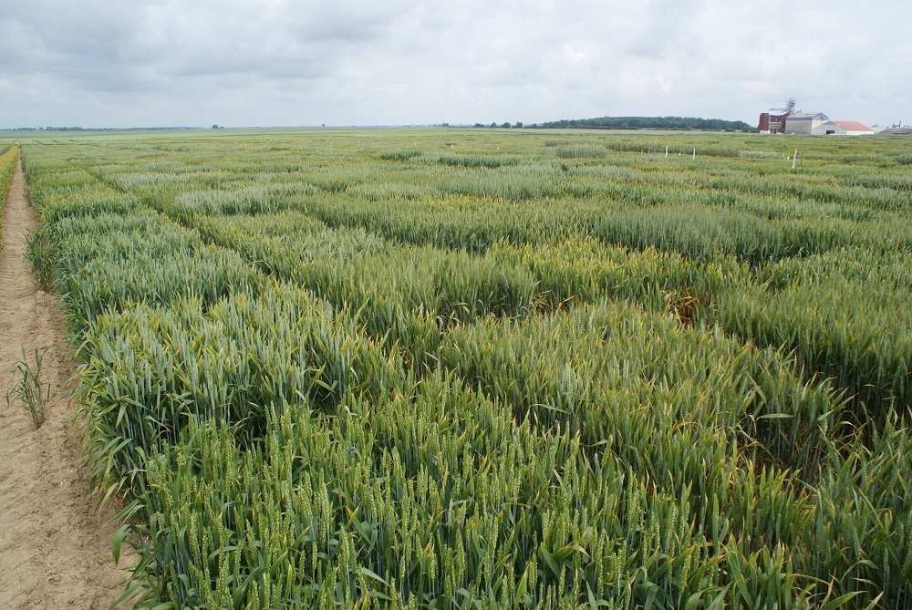 Theory to field genes reveal their secrets cpm magazine - Profitable crops small plots ...